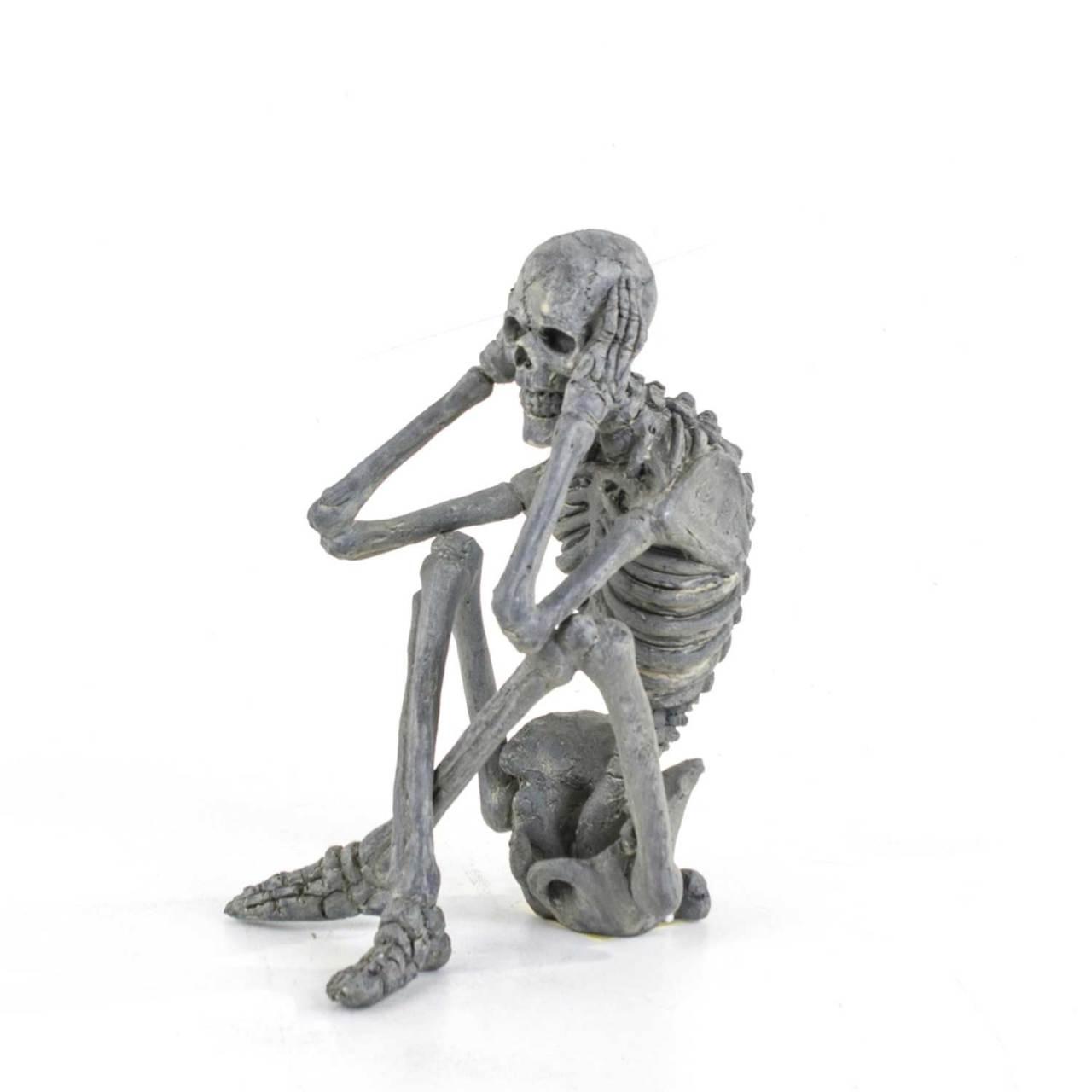 iskelet ile ilgili görsel sonucu