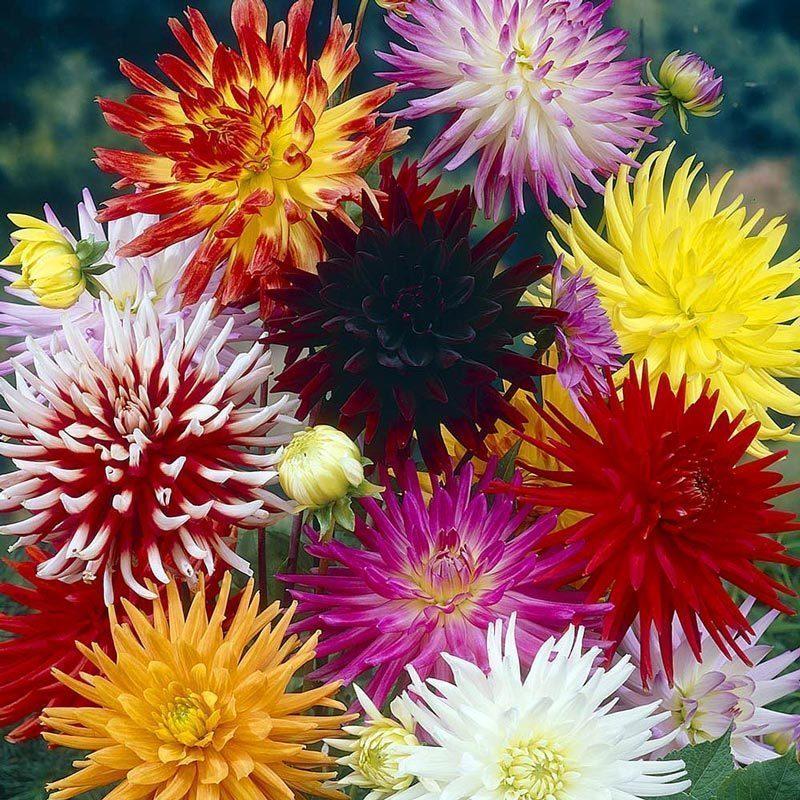 çiçek Açan Bitkiler