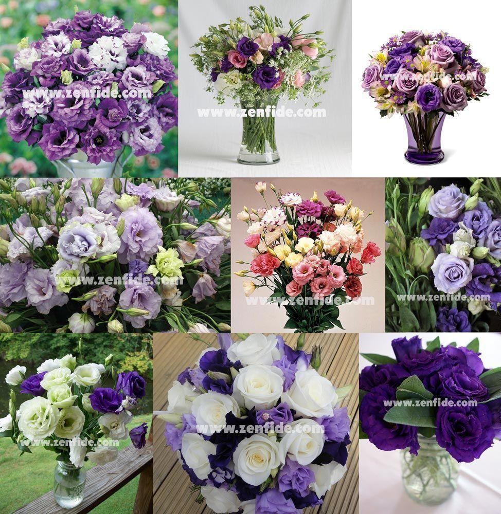 Eustoma çiçeği: evde büyüyen ve bakım