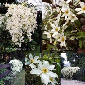 İç mekanı süslüyoruz: bir kreş için seçeceğiniz kapalı çiçeği ne çiçekleniyor 6