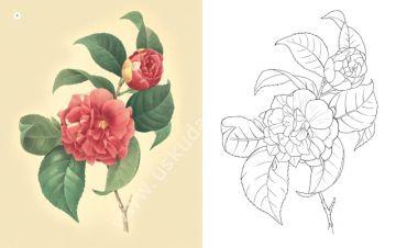 Her Yaş Için Boyama çiçekler Edam Resim Teknik çizim Kitapları